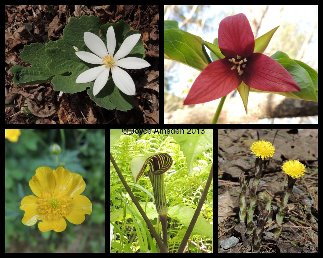 Spring Wildflower Collage